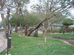 Monteria Park 013